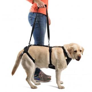 Arnés perro con artrosis