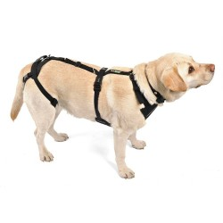 Dog integral harness