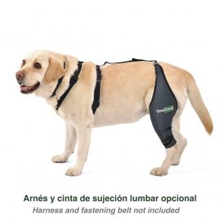 하네스와 고정 벨트가있는 개 무릎 보호대