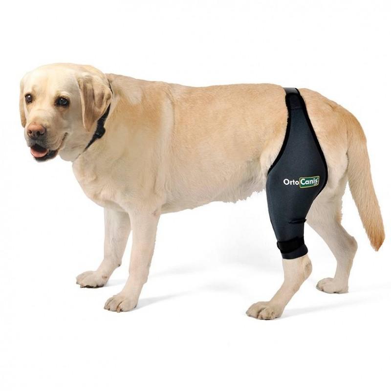 Tutore ginocchio per cani