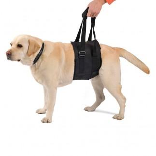 Fascia di supporto per cani