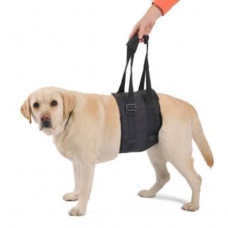 Gürtel Hund zu heben