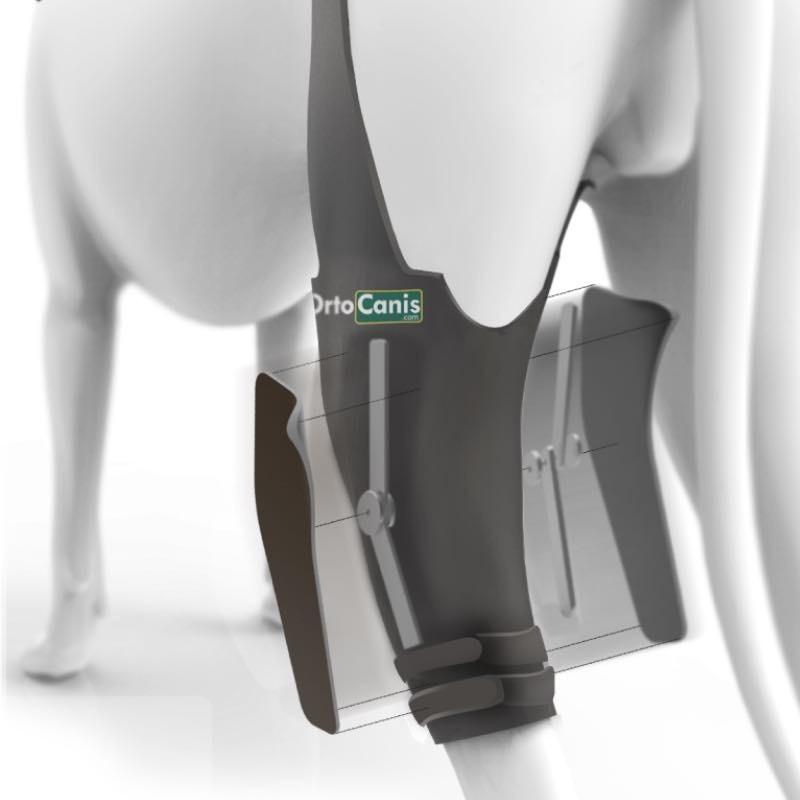 Ortesis de rodilla canina articulada