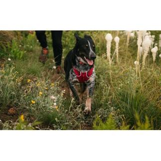 Harnais pour chien Flagline Ruffwear