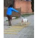 Jalons de rééducation pour circuit de rééducation pour chien