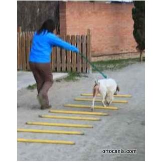 Plastic poles for rehabilitation