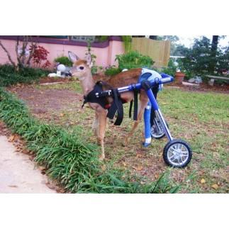 Fauteuil roulant pour chien
