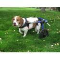 Location chariot roulant pour chien