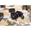Location voiturette pour chien handicapé