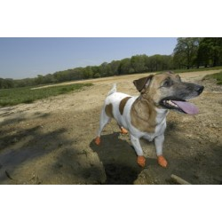 Calçado canino de borracha