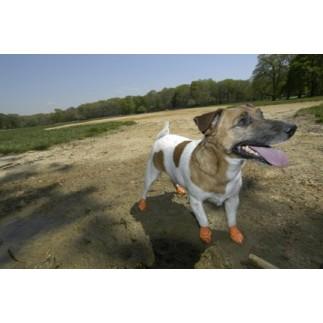 Chaussures de protection pour chien