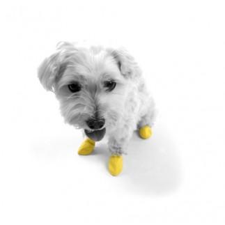 Chaussettes anti-dérapantes pour chien