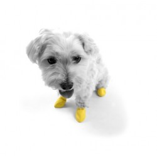 Gummischuhe Hunde