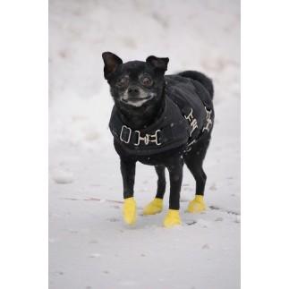 Boots Pawz pour chien