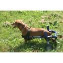 Sedia a rotelle per cane