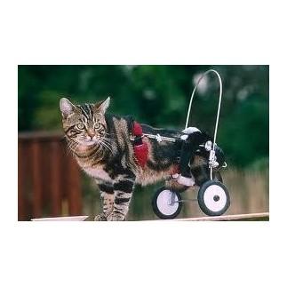 chat en fauteuil roulant