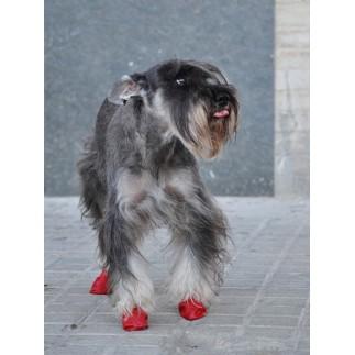 Chaussons Pawz pour chien