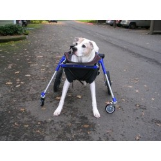 Zubehör Vorderräder für Hunde