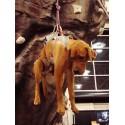 Harnais Double Back de Ruffwear pour chien handicapé ou pour l'alpinisme