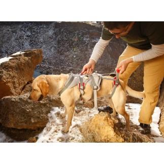 Doppio Indietro Harness. Imbracatura per cani per disabili