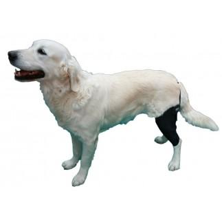 Attelle de genou articulée pour chien