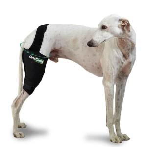 protector-rodilla-perro (1)
