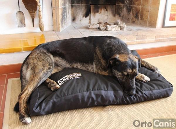 Colchón Ortopédico para perros