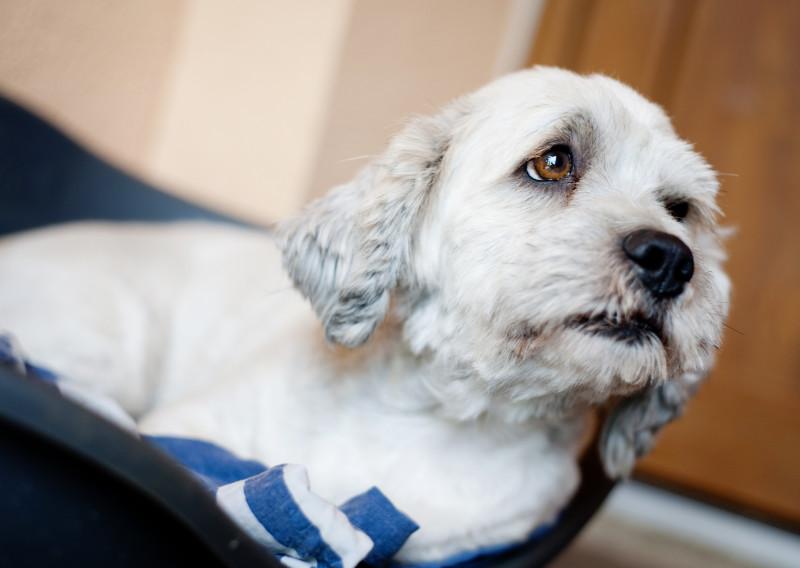 Hernia discal en perros: consejos para ayudar a tu mascota