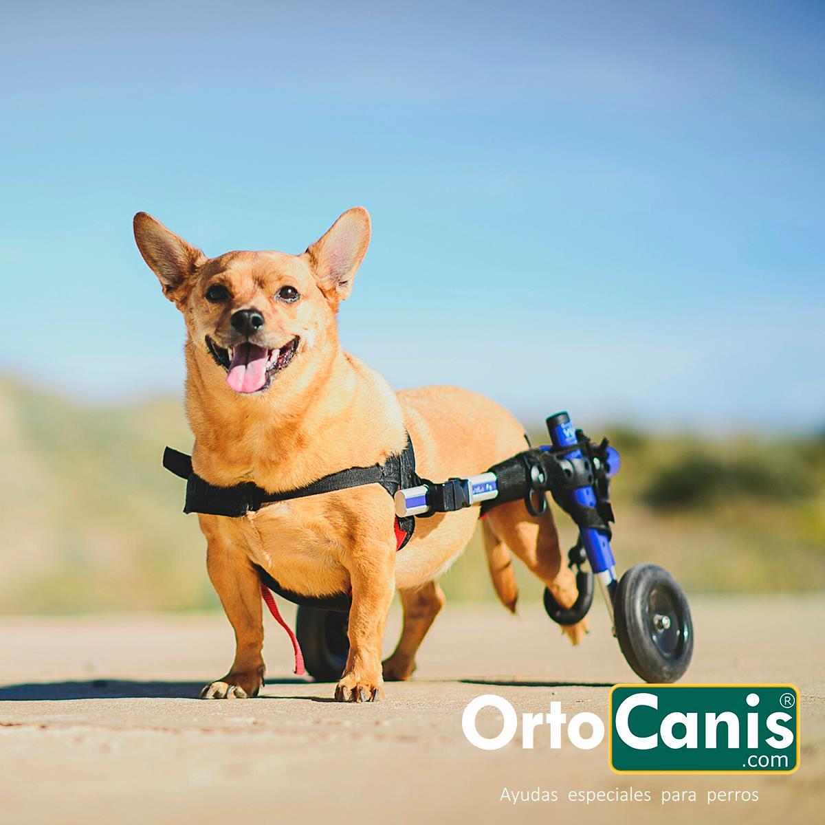 Cómo cuidar de un perro discapacitado