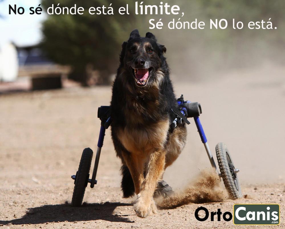 adoptar a un perro discapacitado