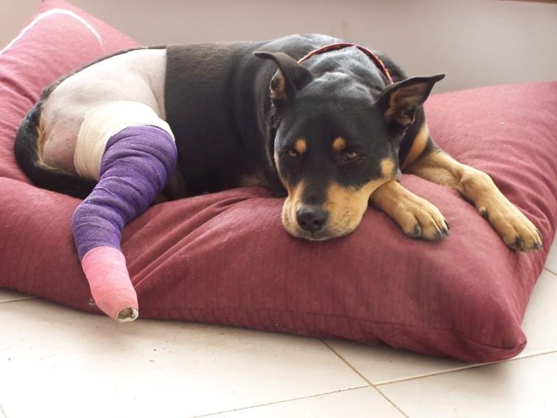 Todo lo que necesitas saber sobre la rehabilitación para perros