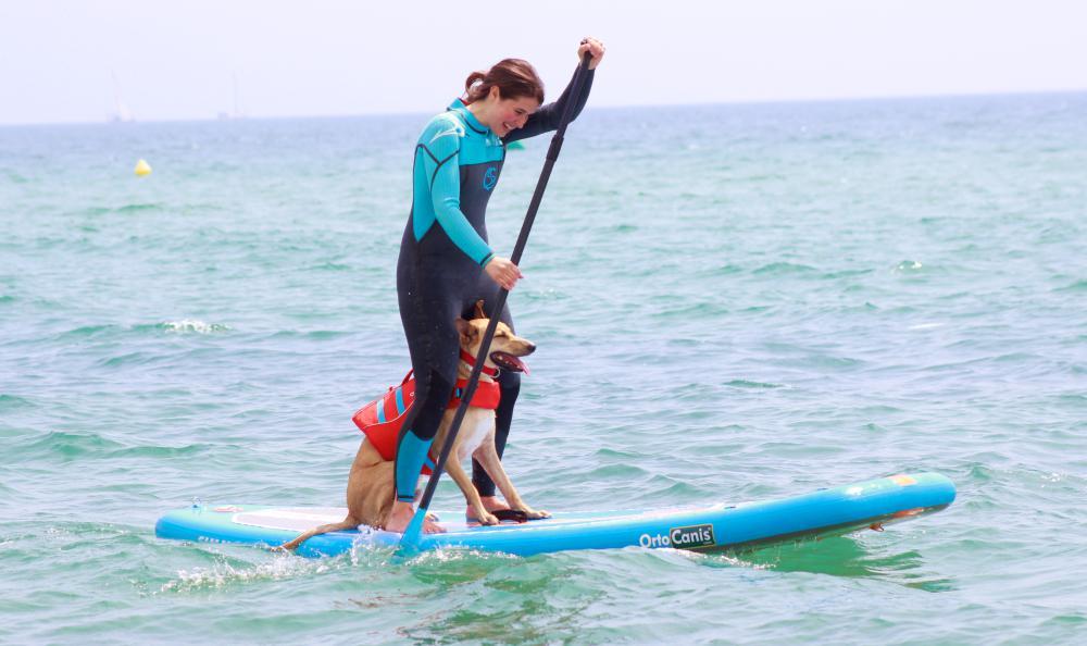 paddle surf perro