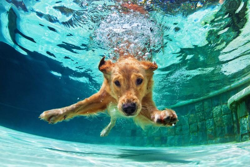 Fisioterapia para animales: acelera su rehabilitación