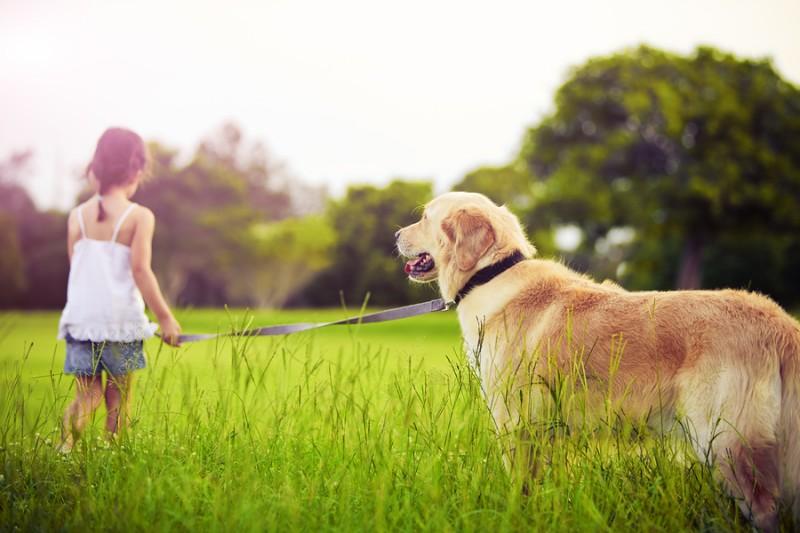 Razones por las que un perro tiene problemas para caminar