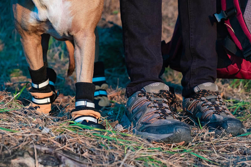 Botas para perros: para prevenir y curar lesiones