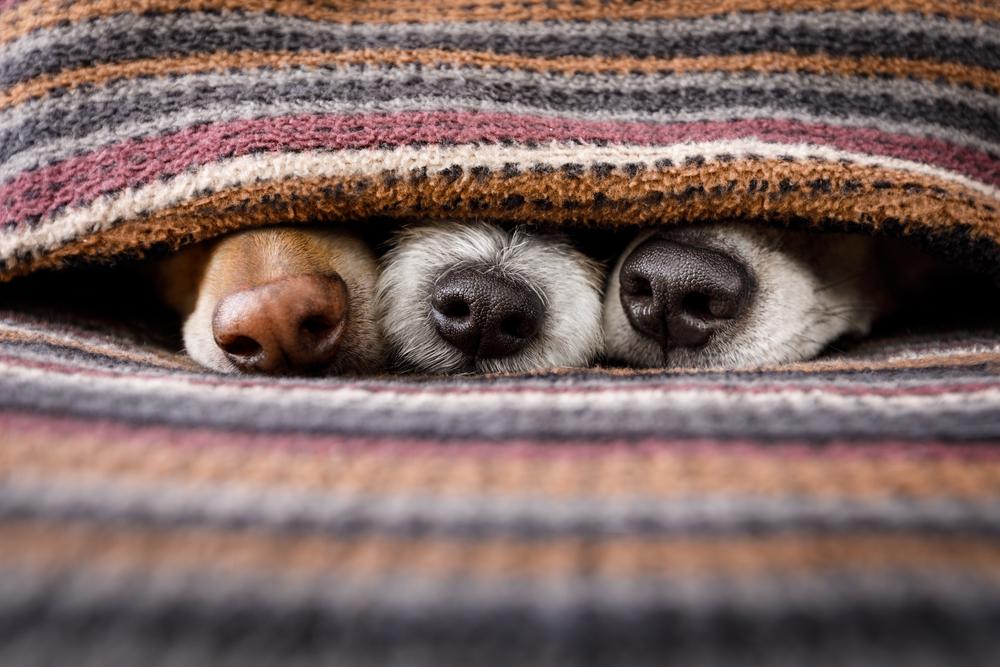 Cuidados en inviernos para perros