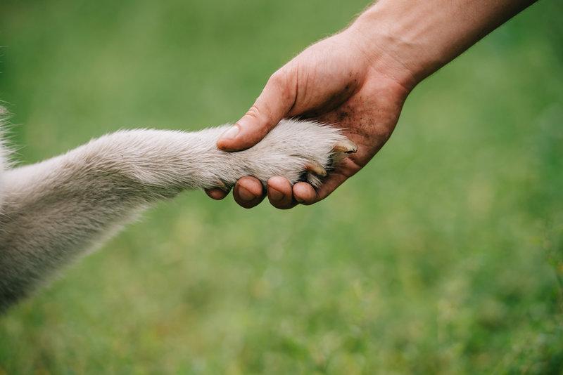Qué hacer ante un perro que arrastra los nudillos al andar