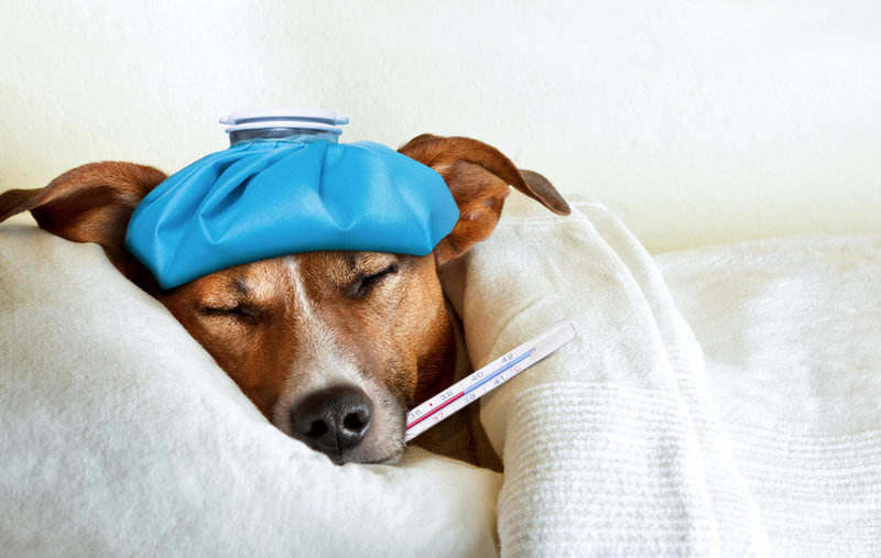 Resfriado en perros: cómo identificarlo y qué hacer para aliviar sus síntomas