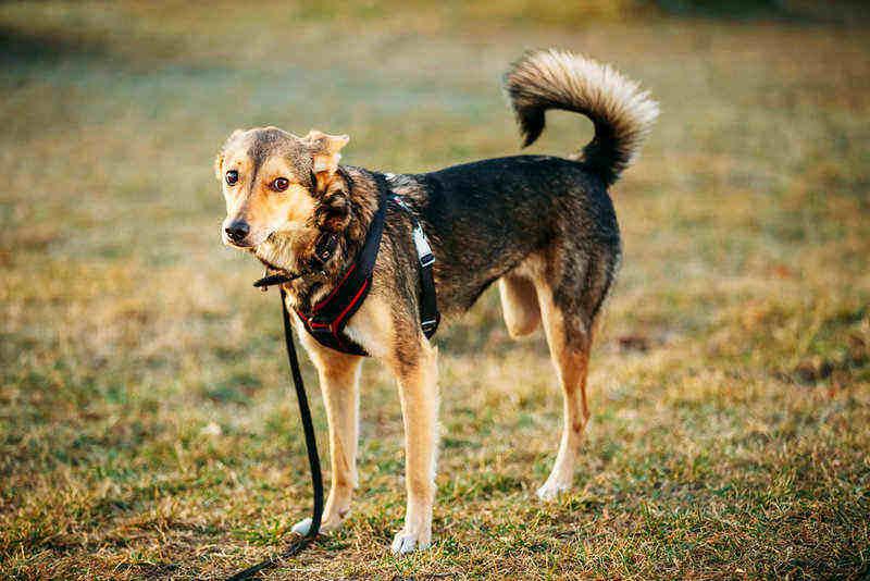 Cuidados de un perro que ha sufrido la amputación de una pata