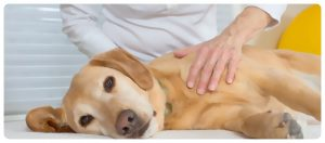 masaje calmante