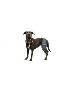 Prodotti ortopedici per cani. Zampe posteriori.