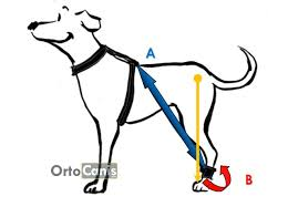 Biko brace para perros