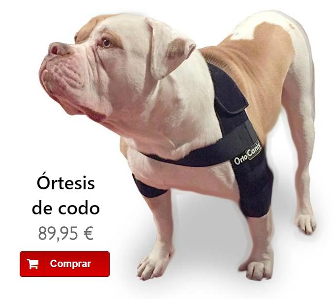 Órtesis de codo para perros con higromas, callos o artrosis