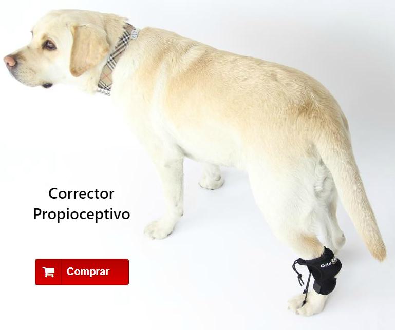 Corrector propioceptivo para perros con knucking