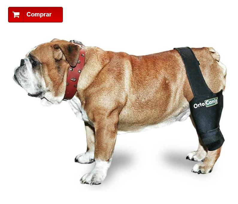 Ortesis de rodilla para perro