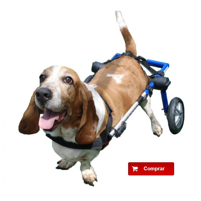 Silla de ruedas para perros paralíticos
