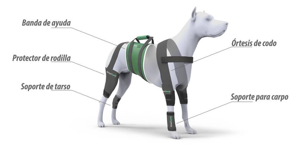 Ayudas ortopédicas para perros