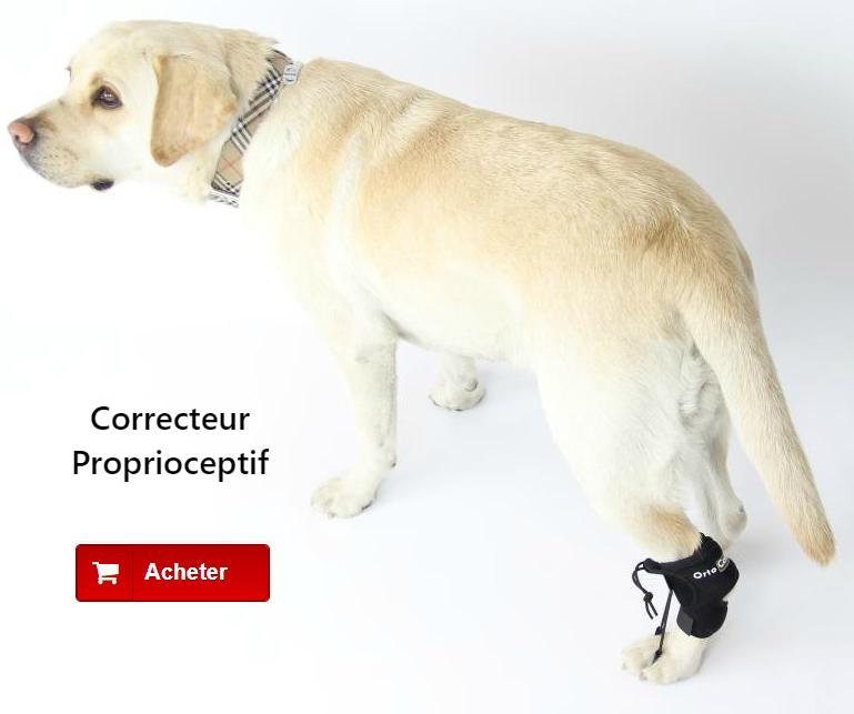 Correcteur propioceptif pour chien