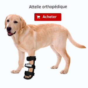 Attelle orthopédique patte avant
