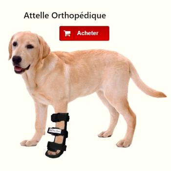 Attelle orthopédique patte avant